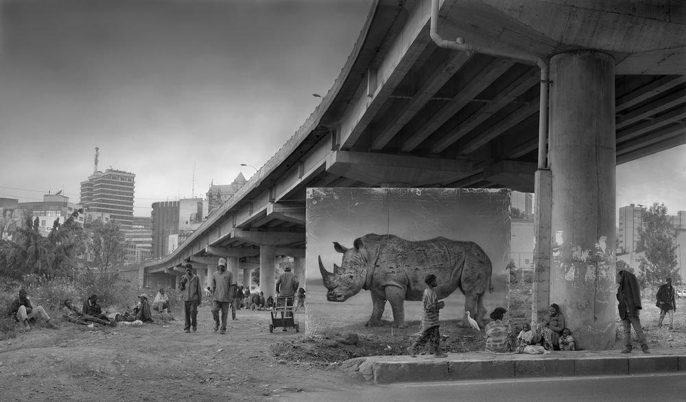 UNDERPASS WITH RHINO & EGRET