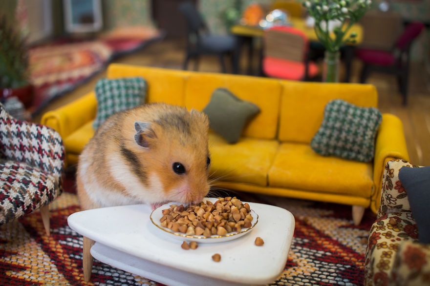 Crafted-miniature-town-for-HUNGRY-HUNGRY-HAMSTERS-online-series-5935d4a2557f9__880