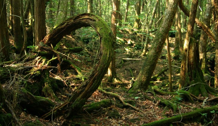 view-from-inside-aokigahara-forest
